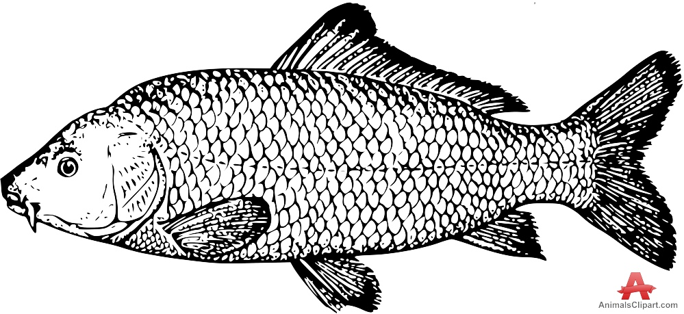 Carp clipart #2, Download drawings