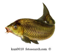 Carp clipart #13, Download drawings
