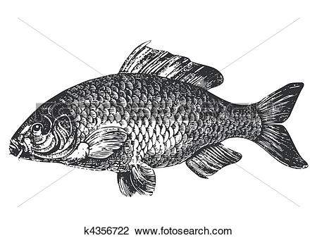 Carp clipart #4, Download drawings