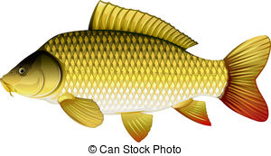 Carp clipart #19, Download drawings