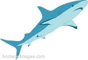 Carpenter Shark clipart #8, Download drawings