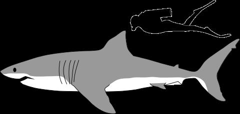 Carpenter Shark svg #15, Download drawings