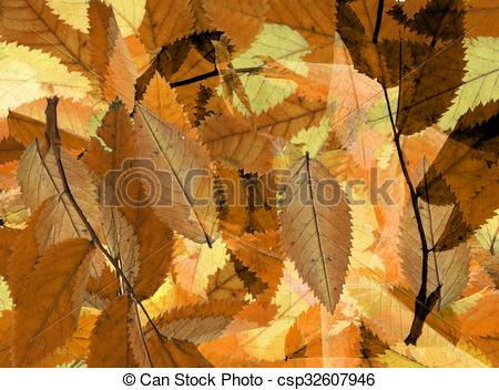 Carpet Of Leaves clipart #14, Download drawings