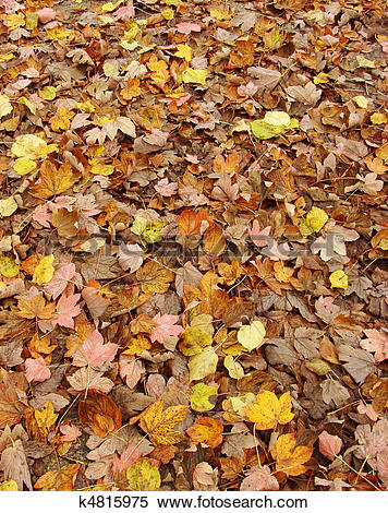 Carpet Of Leaves clipart #7, Download drawings