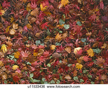 Carpet Of Leaves clipart #17, Download drawings