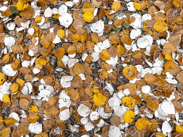 Carpet Of Leaves clipart #2, Download drawings