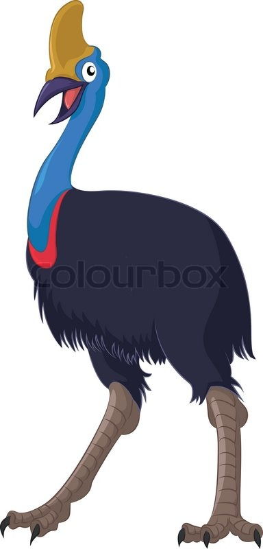 Cassowary clipart #3, Download drawings