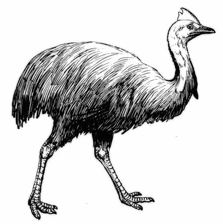 Cassowary clipart #10, Download drawings