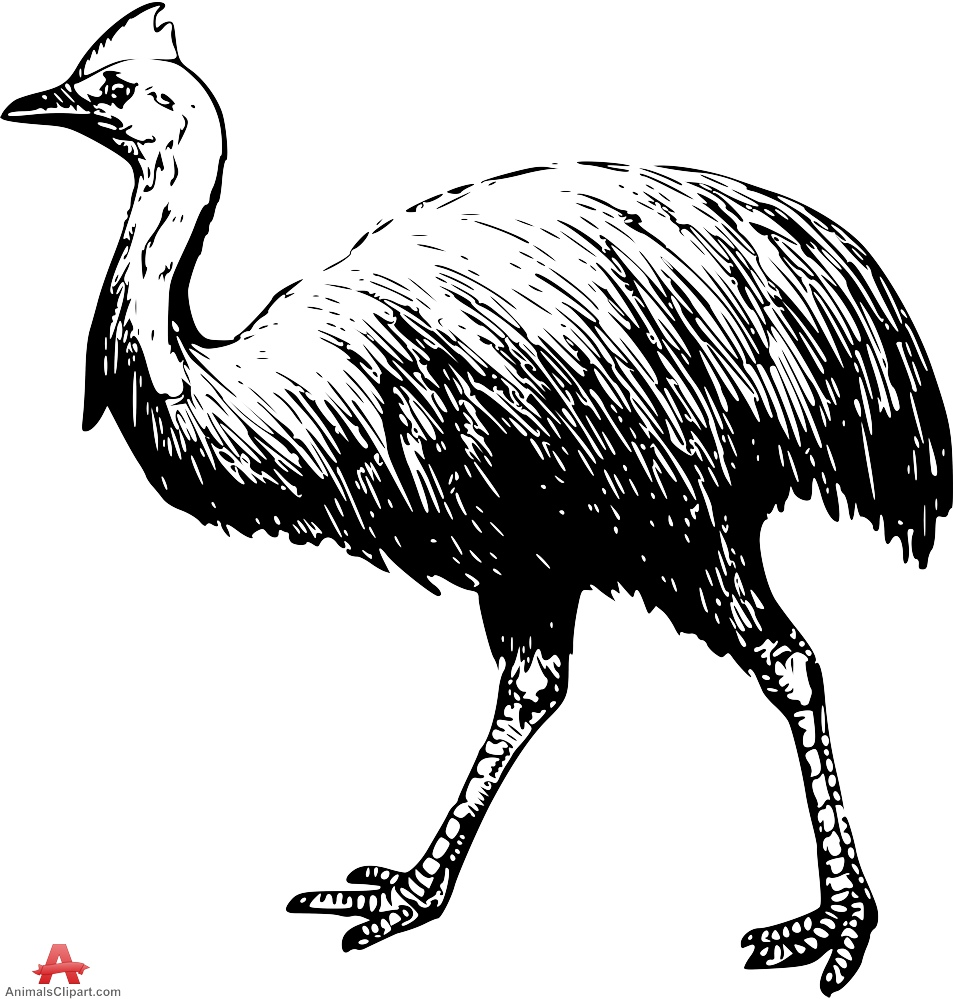 Cassowary clipart #5, Download drawings