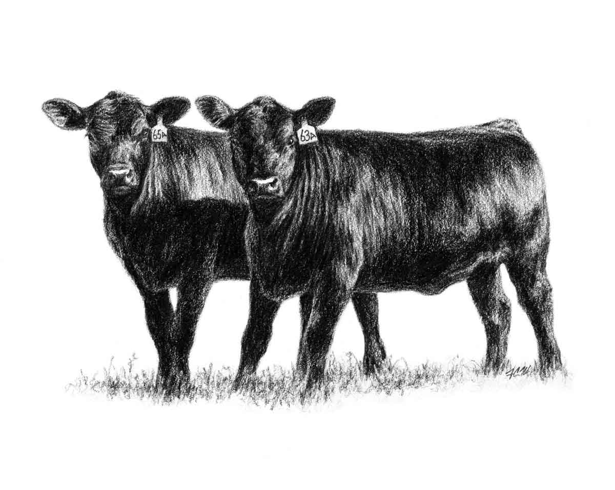 Cattle clipart #10, Download drawings