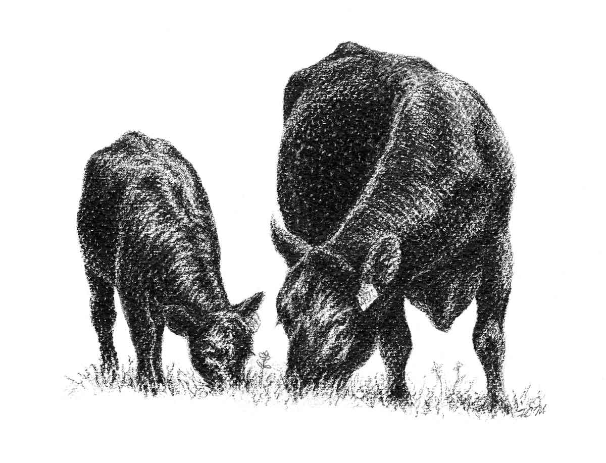 Cattle clipart #6, Download drawings