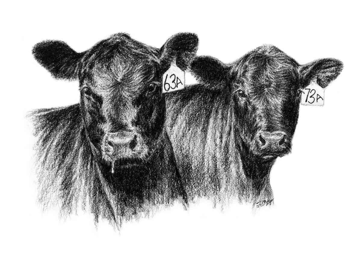 Cattle clipart #5, Download drawings