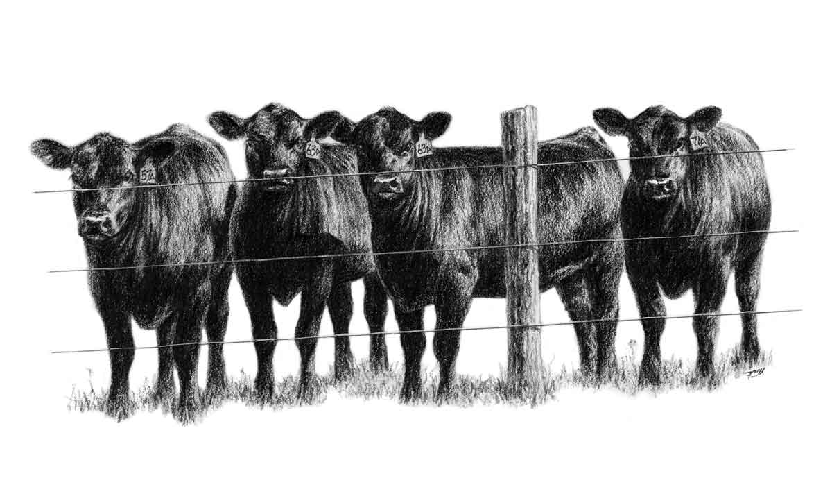 Cattle clipart #9, Download drawings