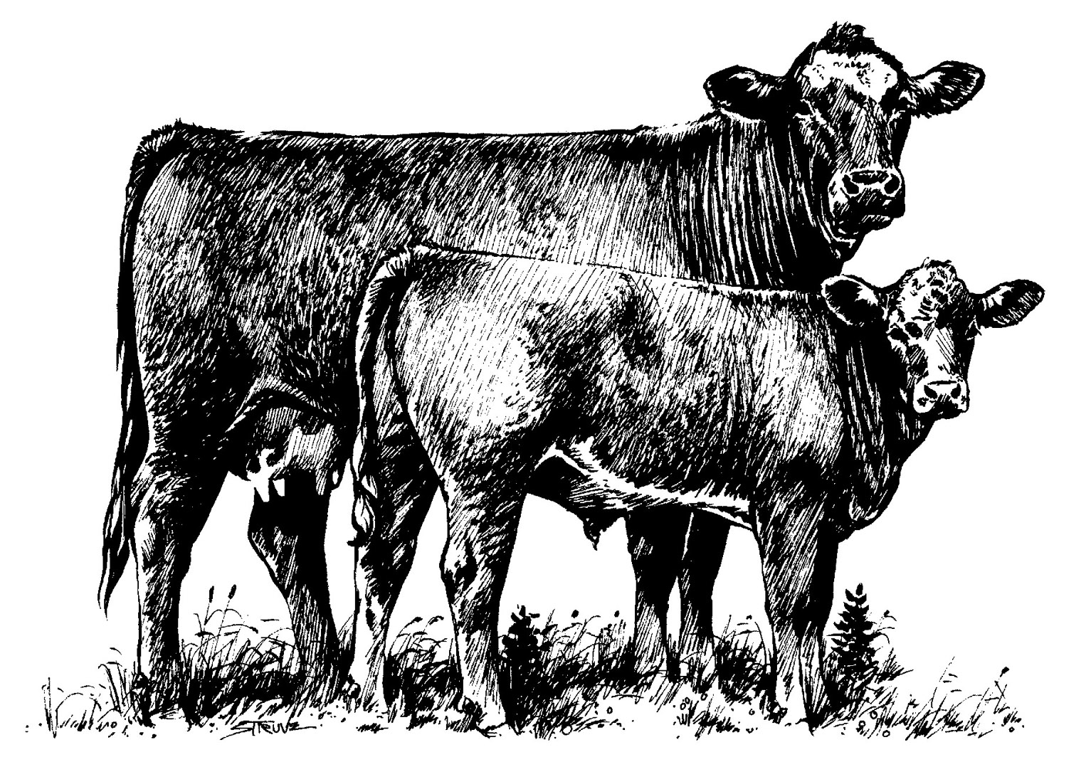 Cattle clipart #3, Download drawings
