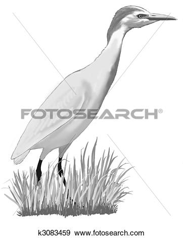 Cattle Egret clipart #8, Download drawings