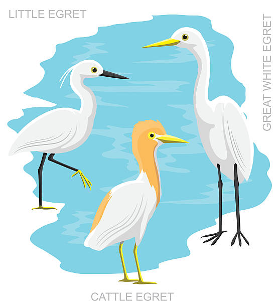 Cattle Egret clipart #11, Download drawings