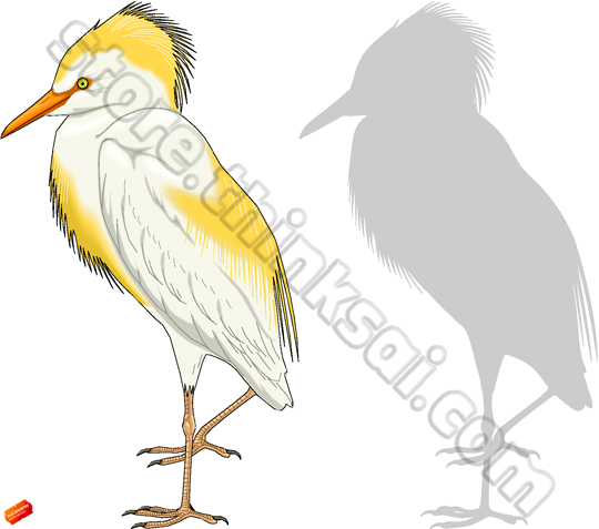 Cattle Egret clipart #1, Download drawings