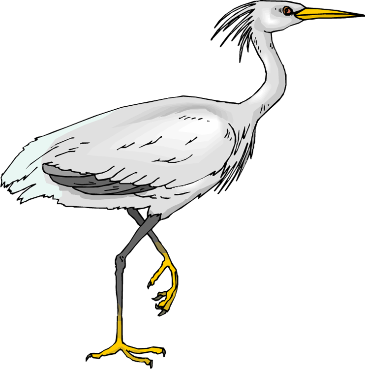 Cattle Egret clipart #17, Download drawings