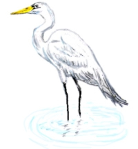 Great Egrets clipart #20, Download drawings