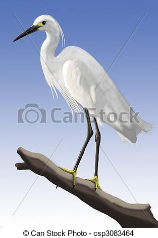 Cattle Egret clipart #10, Download drawings