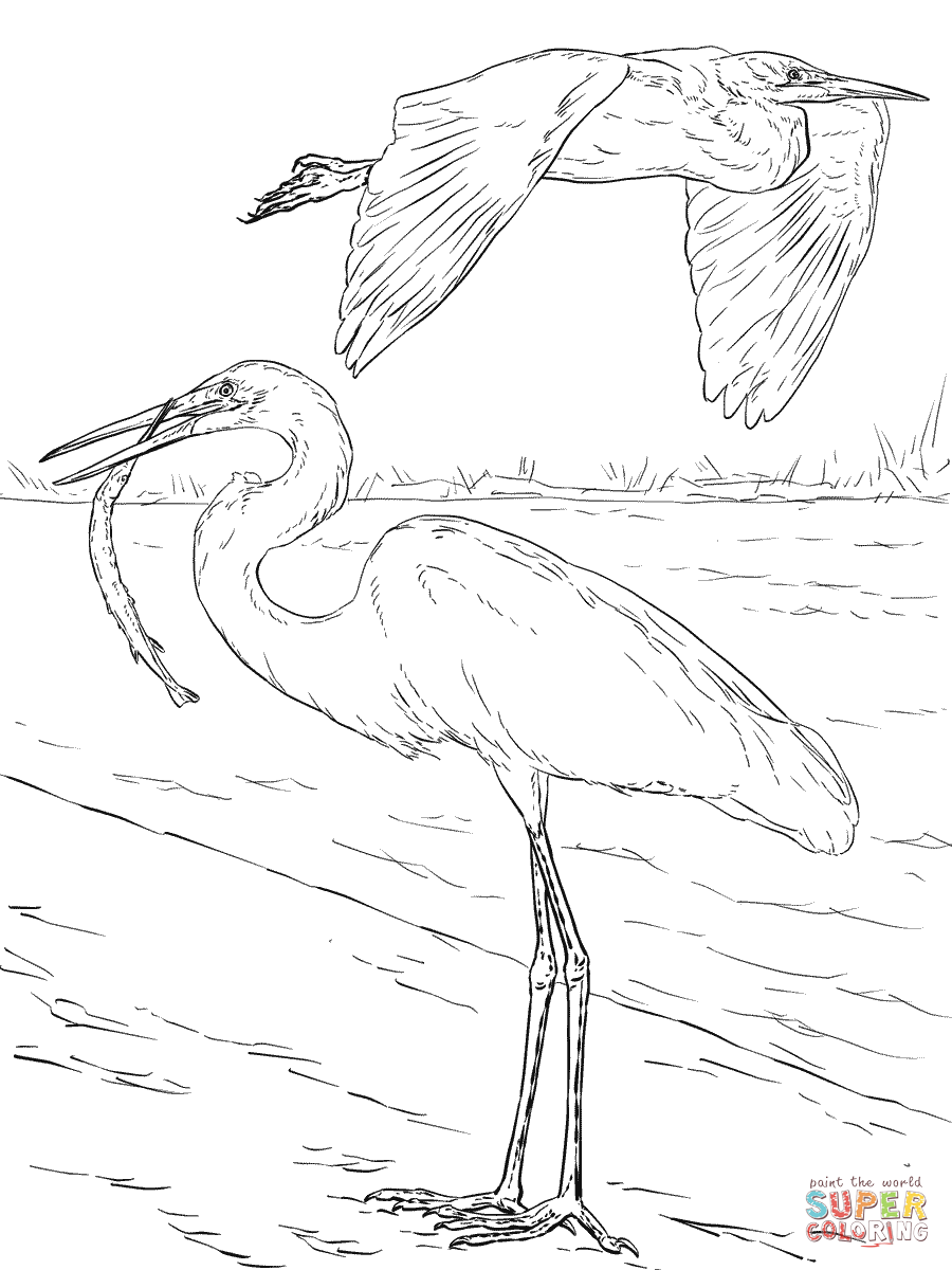 Great Egrets coloring #15, Download drawings