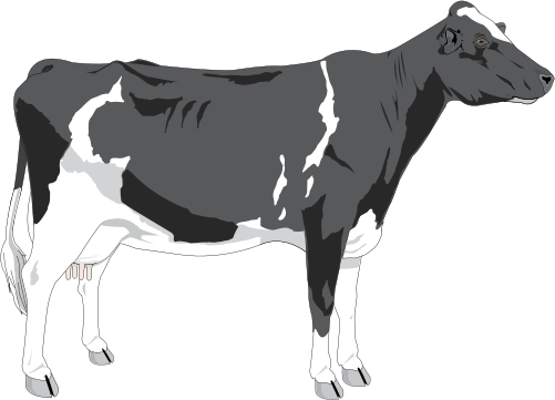 Cattle svg #8, Download drawings