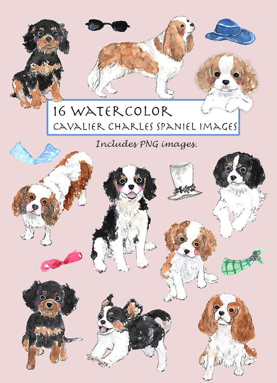 Cavalier King Charles clipart #5, Download drawings