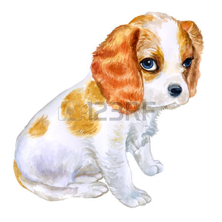 Cavalier King Charles clipart #4, Download drawings