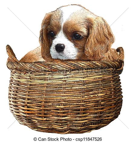 Cavalier King Charles clipart #1, Download drawings