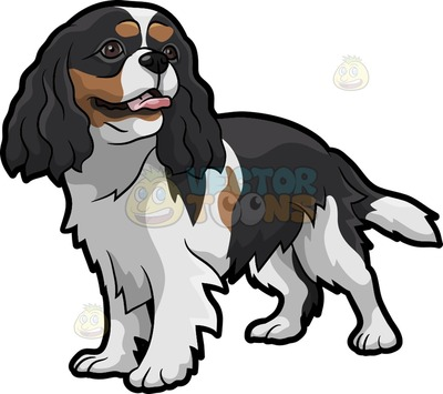 Cavalier King Charles clipart #3, Download drawings