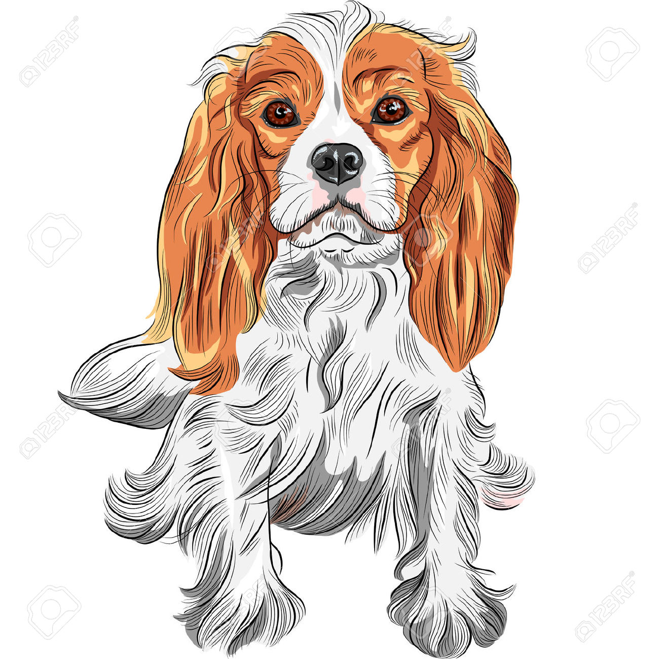 Cavalier King Charles clipart #13, Download drawings