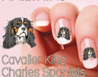Cavalier King Charles svg #3, Download drawings