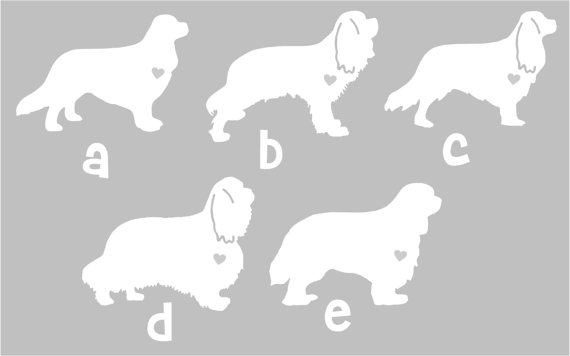 Cavalier King Charles svg #19, Download drawings