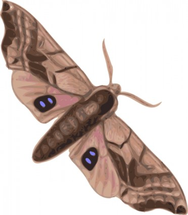 Cecropia Moth clipart #9, Download drawings