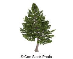 Cedar clipart #14, Download drawings