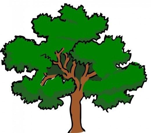 Cedar clipart #12, Download drawings