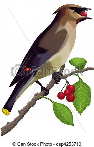Waxwing clipart #17, Download drawings