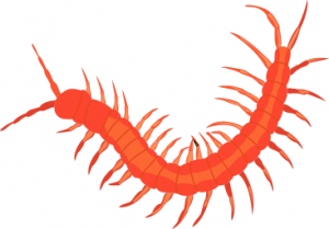 Centipede clipart #10, Download drawings