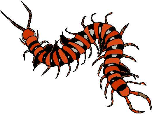 Centipede clipart #11, Download drawings