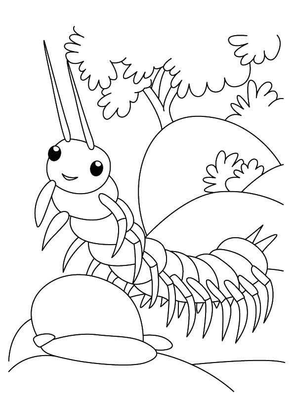Centipede coloring #1, Download drawings