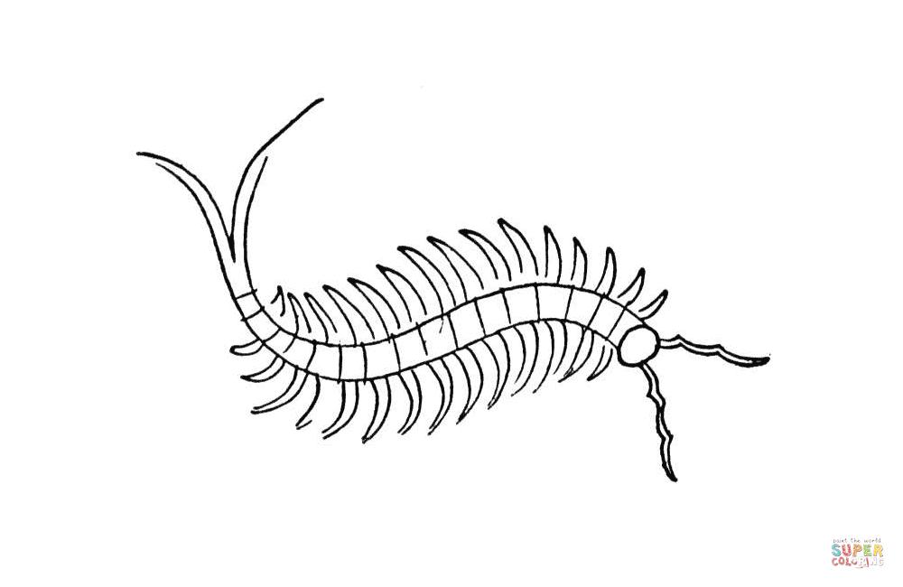 Centipede coloring #6, Download drawings