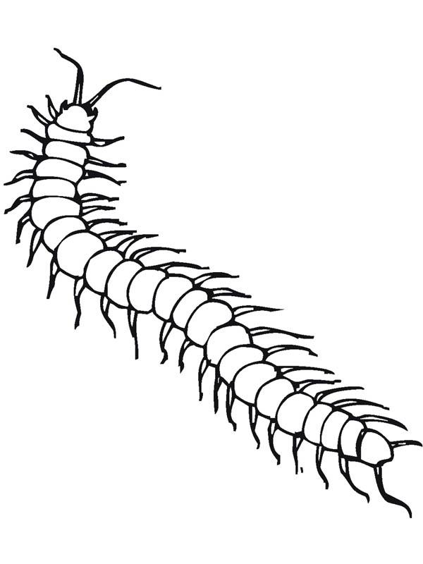 Centipede coloring #3, Download drawings