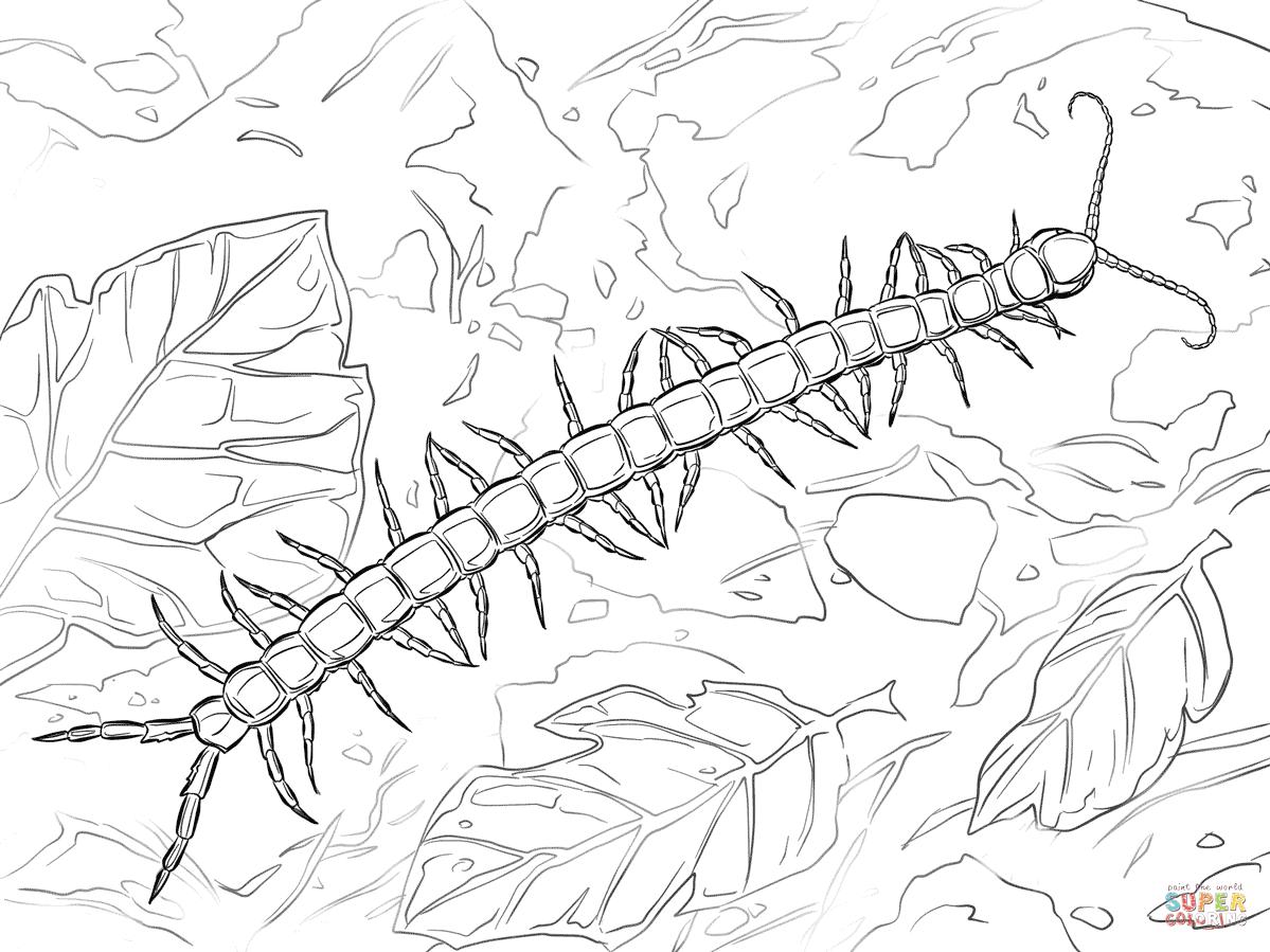 Centipede coloring #9, Download drawings