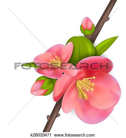 Chaenomeles Japonica clipart #16, Download drawings