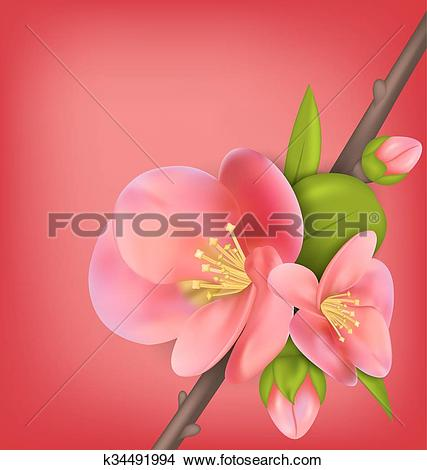 Chaenomeles Japonica clipart #15, Download drawings