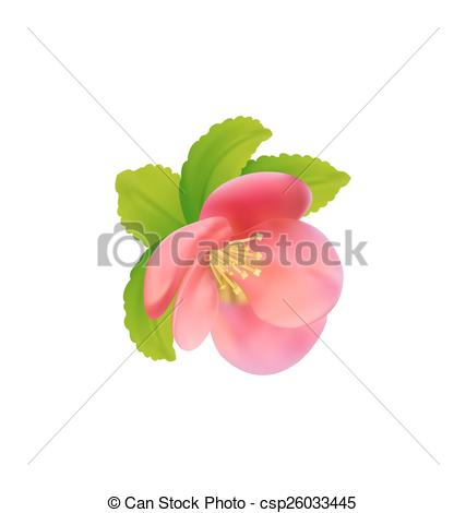Chaenomeles Japonica clipart #18, Download drawings