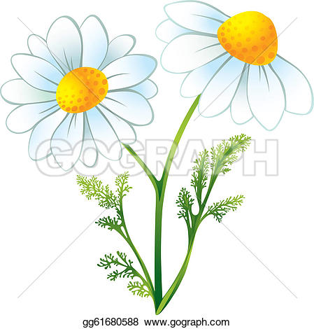 Chamomile clipart #9, Download drawings