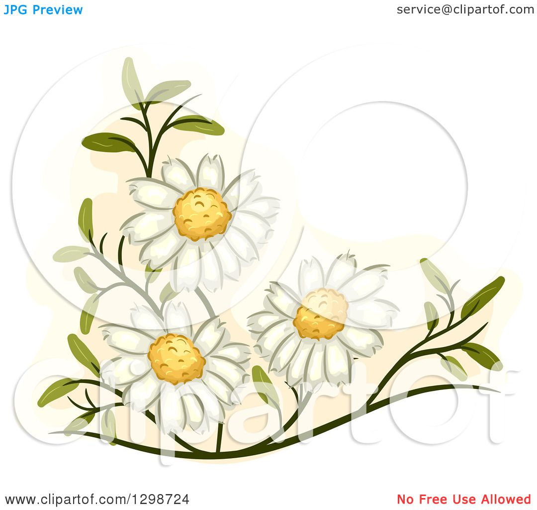 Chamomile clipart #4, Download drawings