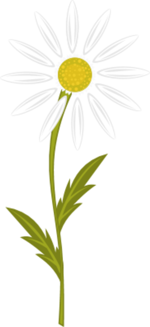 Chamomile clipart #19, Download drawings