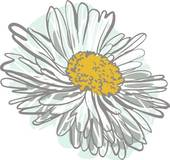 Chamomile clipart #17, Download drawings
